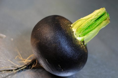 Czarna rzepa dla chorej wątroby – Z. T. Nowak
