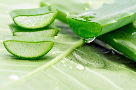 Aloes – właściwości lecznicze izastosowanie