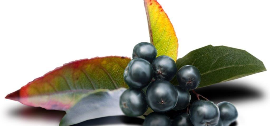 Maqui berry – jagody zserca Amazonii