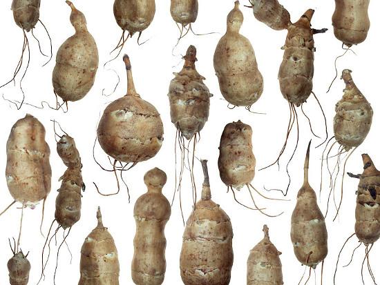 Topinambur – warzywo, które zastąpił ziemniak.