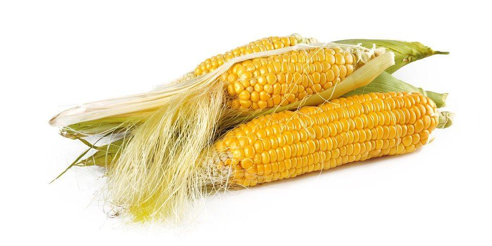 Olej kukurydziany- właściwości izastosowanie
