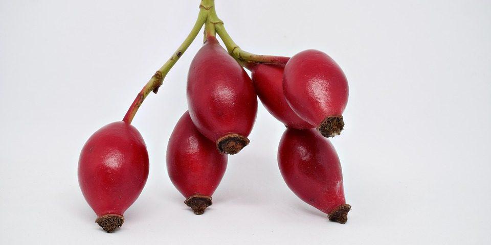 Dzika róża- staropolska skarbnica witaminy C