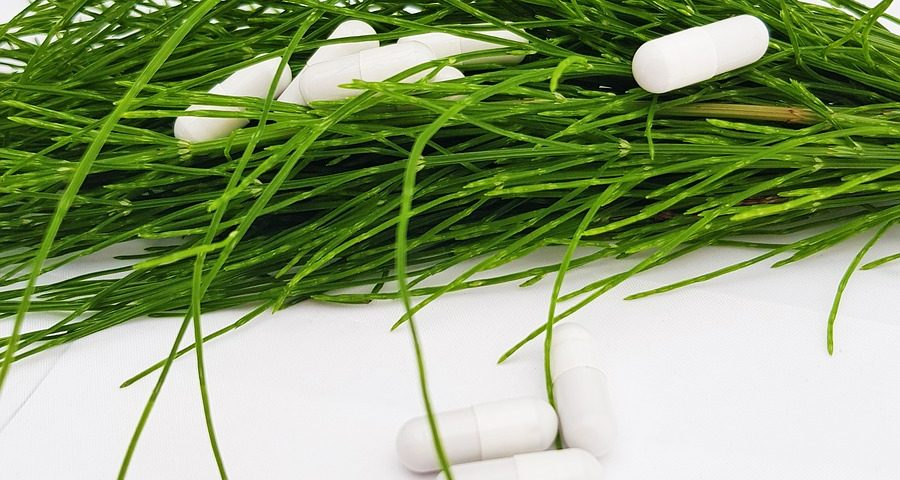 Skrzyp polny- zielone wsparcie urody izdrowia