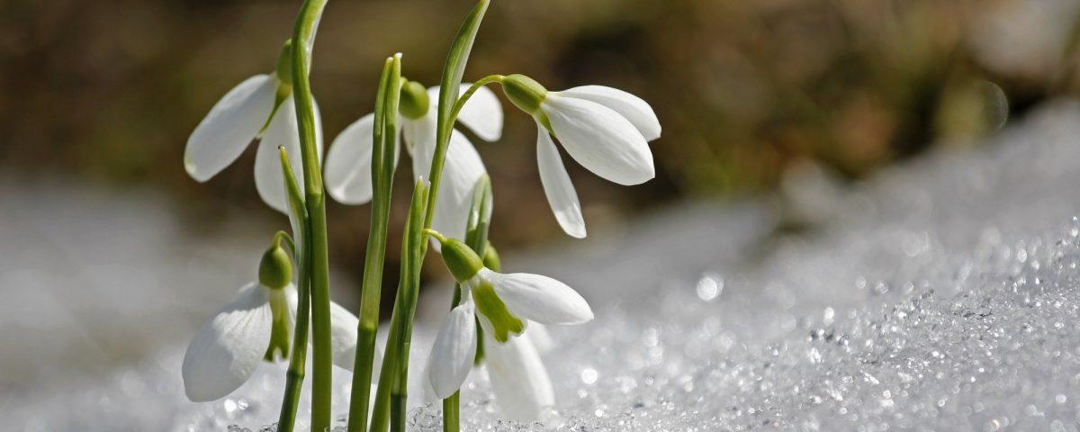 Przesilenie wiosenne- jak sobie pomóc?